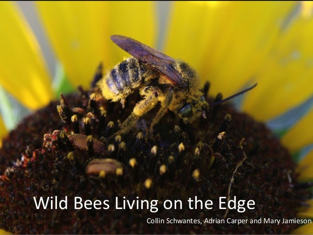 Wild  Bees  Living  on  the  Edge  Collin  Schwantes,  Adrian  Carper  and  Mary  Jamieson