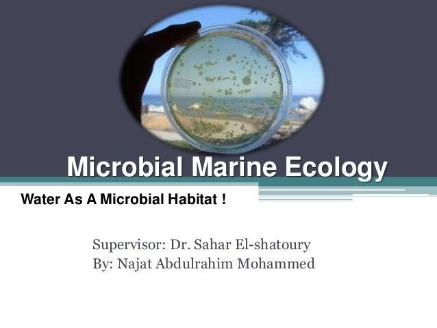 Microbial Marine Ecology Supervisor: Dr. Sahar El-shatoury By: Najat Abdulrahim Mohammed Water As A Microbial Habitat !