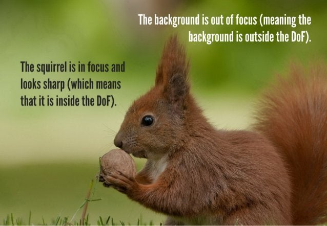 A large or deep DoF produces an image that has a large area that is in focus.   An image with a deep DoF appears more cris...