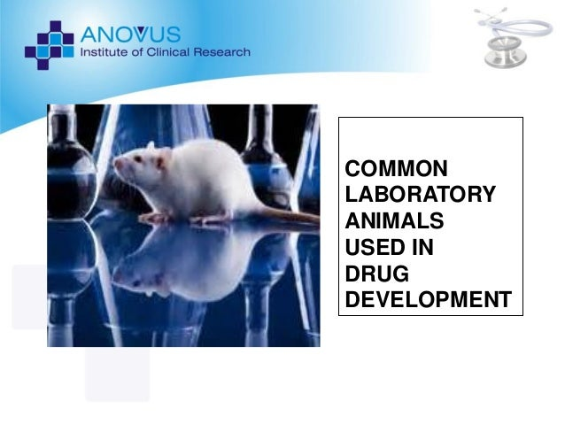 preclinical lab animals ppt