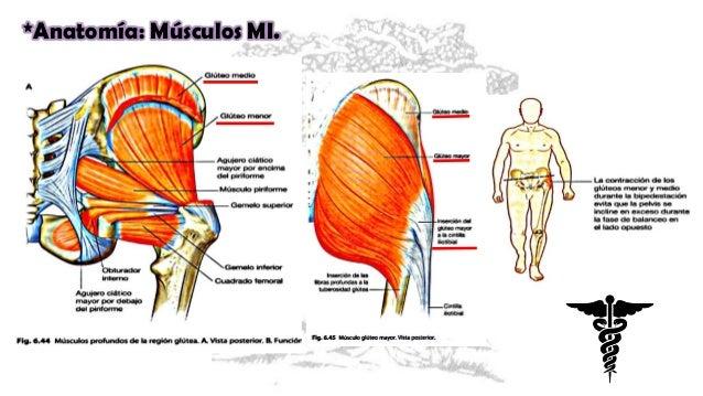 7 fx de cadera cabeza, cuello y subtrocantericas