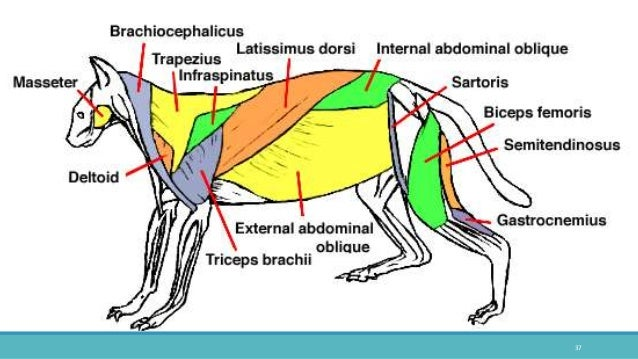 Comparative Anatomy Of The Vertebrates 1057669 Follow4morefo