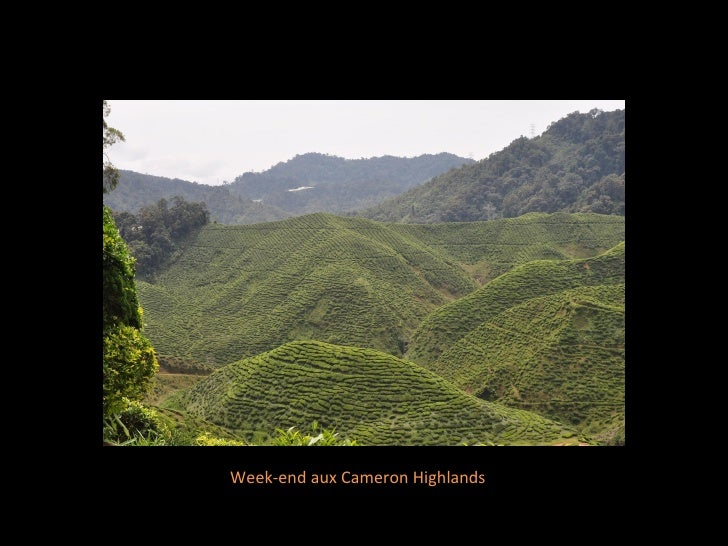 Week-end aux Cameron Highlands