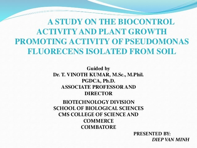 A STUDY ON THE BIOCONTROL ACTIVITYAND PLANT GROWTH PROMOTING ACTIVITY OF PSEUDOMONAS FLUORECENS ISOLATED FROM SOIL PRESENT...
