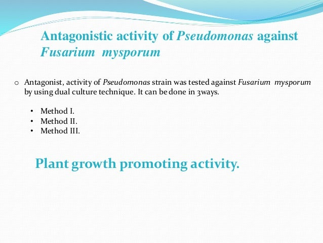 Antagonistic activity of Pseudomonas against Fusarium mysporum o Antagonist, activity of Pseudomonas strain was tested aga...