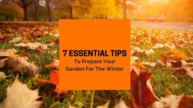 7 Essential Tips To Prepare Your Garden For The Winter
