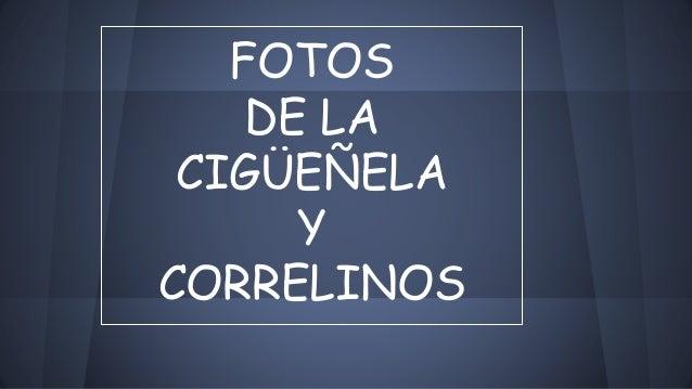 FOTOS DE LA CIGÜEÑELA Y CORRELINOS