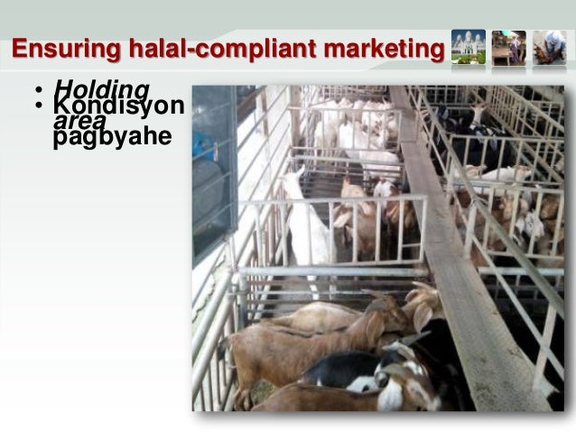 Raising goats the Halal way - RS_Hechanova