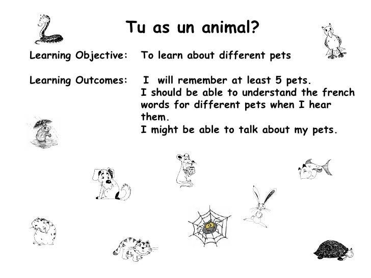 Tu as un animal? Learning Objective: To learn about different pets Learning Outcomes:   I  will remember at least 5 pets. ...