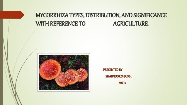 MYCORRHIZA TYPES, DISTRIBUTION, AND SIGNIFICANCE WITHREFERENCE TO AGRICULTURE. PRESENTEDBY SHABNOORSHAIKH MSC1