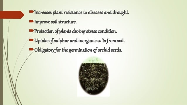 Increases plant resistance to diseases and drought. Improve soil structure. Protection of plants during stress conditio...