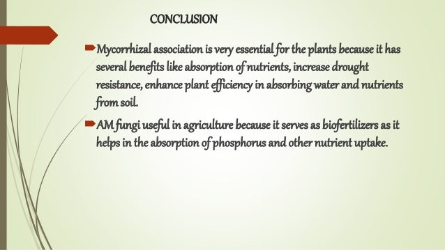 CONCLUSION Mycorrhizal association is very essential for the plants because it has several benefits like absorption of nu...