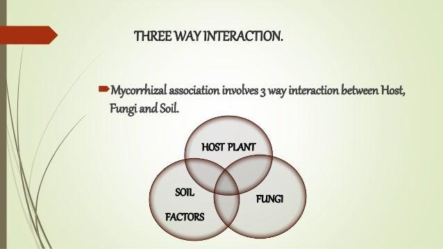 THREE WAY INTERACTION. Mycorrhizal associationinvolves 3 way interactionbetween Host, Fungi and Soil. HOST PLANT FUNGI SO...