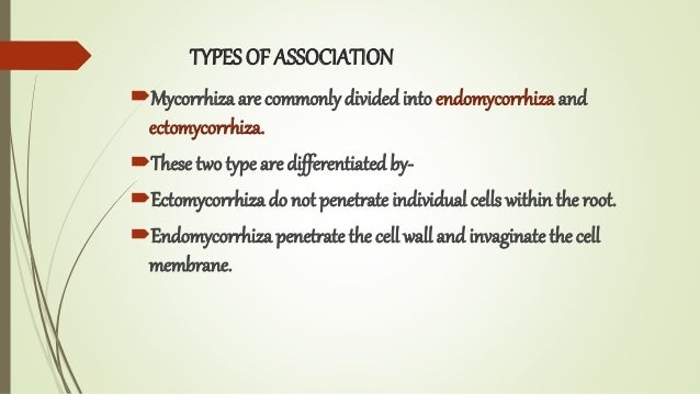 TYPES OF ASSOCIATION Mycorrhiza are commonly dividedinto endomycorrhiza and ectomycorrhiza. These two type are different...