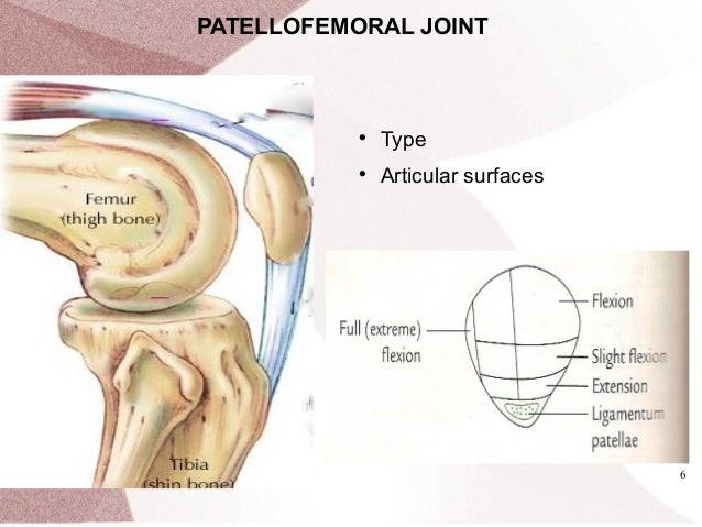 knee joint Rishi Pokhrel