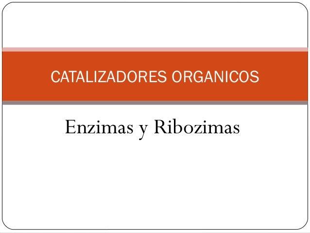 Enzimas y Ribozimas CATALIZADORES ORGANICOS