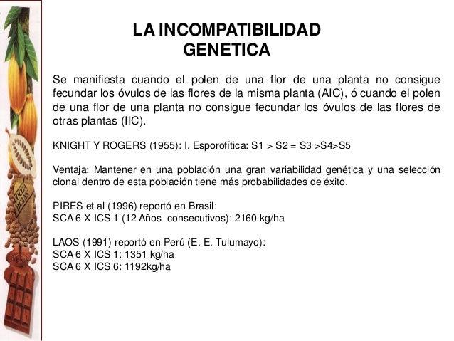 7 mejoramiento genetico del cacao for Incompatibilidad en plantas