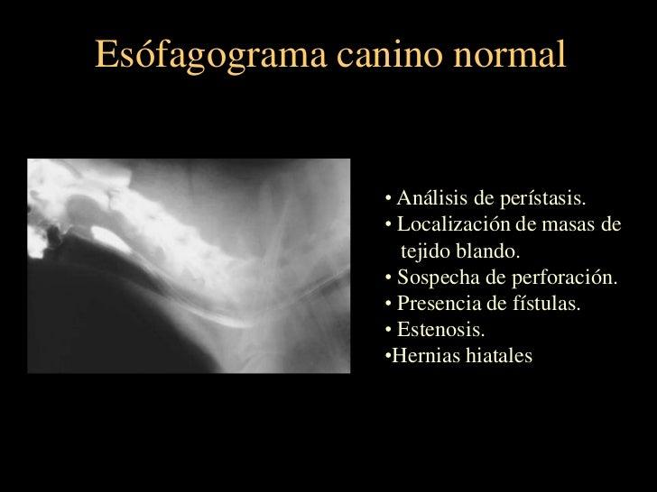 Radiología del torax de pequeños animales