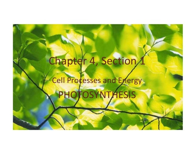 Chapter 4, Section 1Cell Processes and Energy PHOTOSYNTHESIS