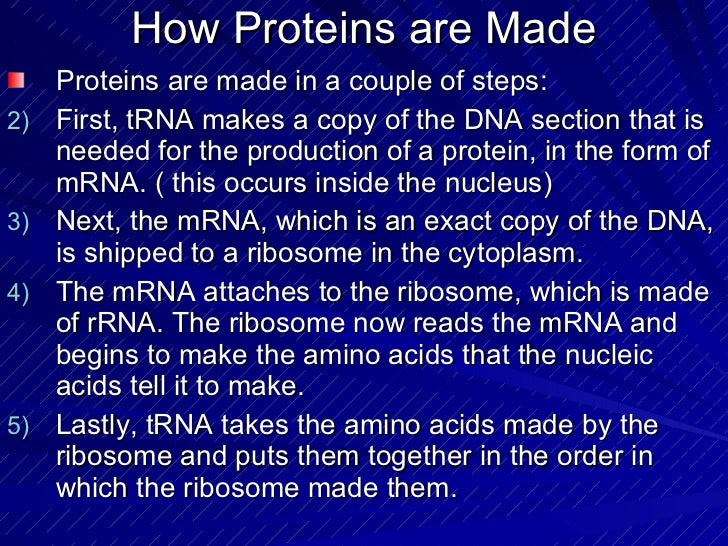 Proteins Made