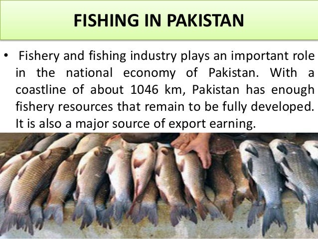 role of transportation in economic development of pakistan tourism essay The role of transportation in the development of tourism in this essay, i will evaluate the role of transportation in the development of tourism and how it will help to improve and expand the tourism industry  but transport also consumes a lot of resources like time,fuel, materials and land 32 economic role of transportation economics.