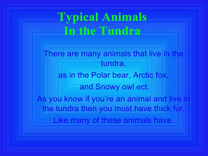 7th Period Tundra