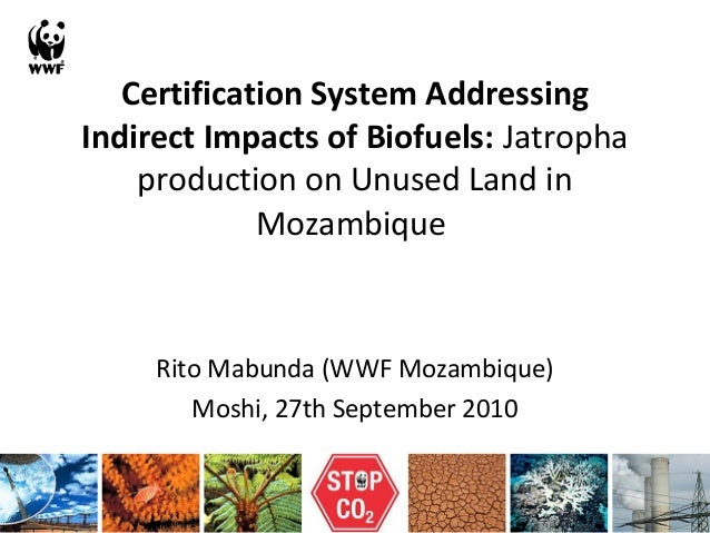 Certification System Addressing Indirect Impacts of Biofuels: Jatropha production on Unused Land in Mozambique Rito Mabund...