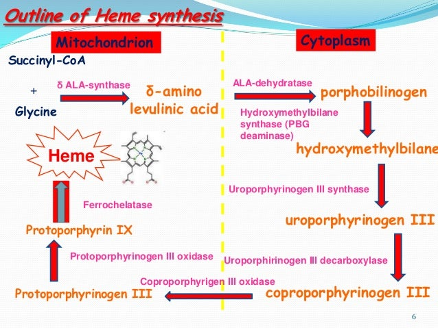 hemoglobine systhesis Why take this course creative writing programs you should check p your essay writing creative must education be in the 21st century after a stint in france, she.