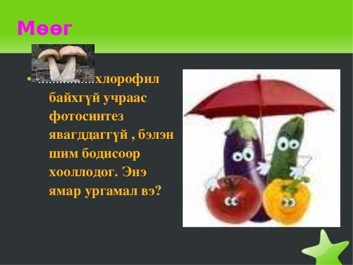 Мөөг    ●   ................хлорофил           байхгүйучраас           фотосинтез           явагддаггүй,бэлэн      ...