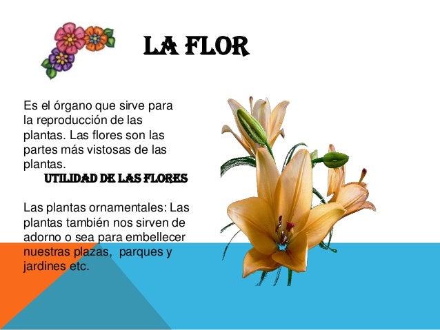 Las plantas partes funci n impotancia y utilidad for Cuales son las plantas ornamentales y sus nombres