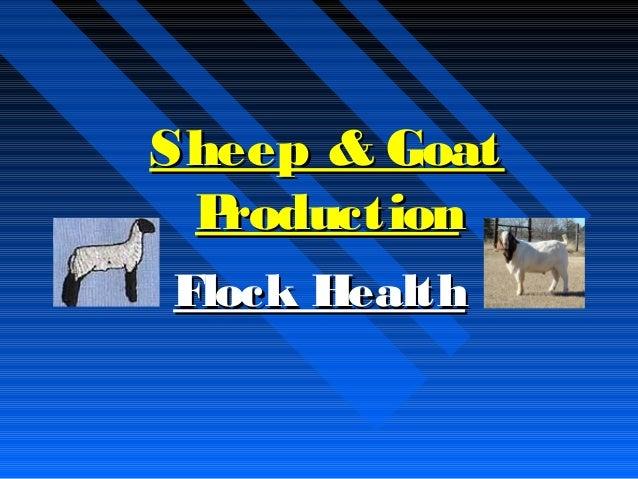 Sheep & GoatSheep & Goat ProductionProduction Flock HealthFlock Health