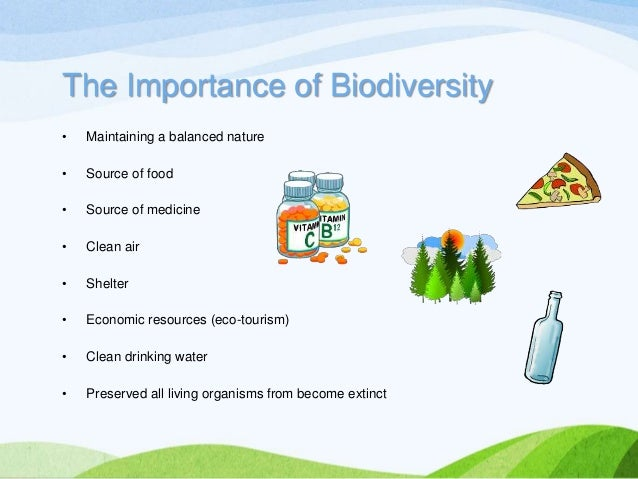 importance of biodiversity Biodiversity (see box 1) is essential for ecosystem productivity and function it plays a key role in ecosystem stability, which is a measure of a system's resilience to environmental change, such as is expected from future shifts in climate.