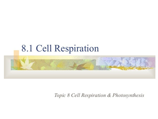 8.1 Cell Respiration Topic 8 Cell Respiration & Photosynthesis