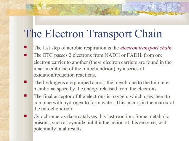 Understanding how the electron transport works