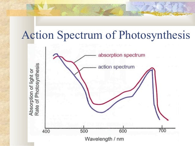 8.2 photosynthesis