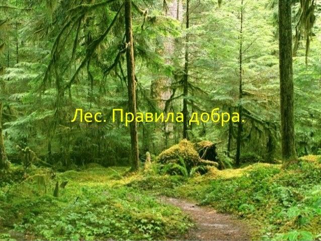 Лес. Правила добра.
