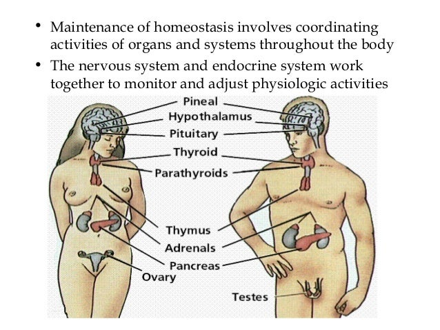How Does The Immune System Work With The Muscular System 120