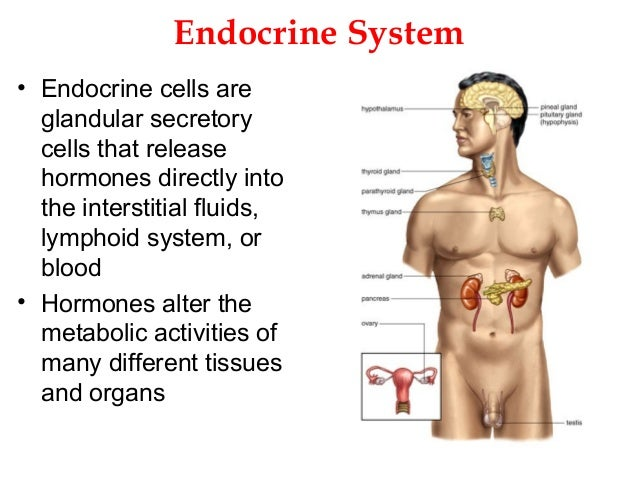 8. endocrine system, Human Body