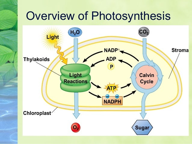 8.2 Photosynthesis 2014