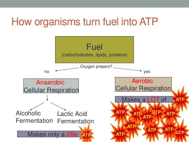 82-cellular-respiration-2014-10-638.jpg?