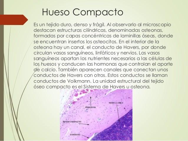 Tejido Conectivo \