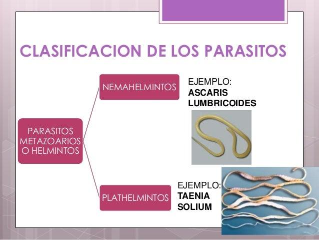 Como determinar los parásitos en el hígado