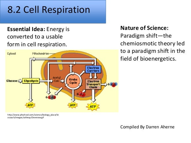 cell respiration The key points: glucose stores the sun's energy in chemical form adenosine triphosphate - atp the molecule organisms can actually use for energy.
