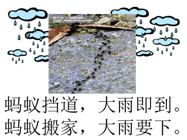 蚂蚁挡道,大雨即到。 蚂蚁搬家,大雨要下。