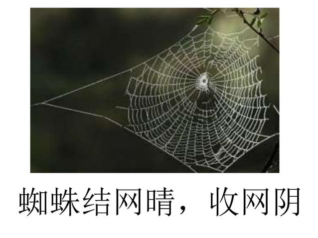 蜘蛛结网晴,收网阴