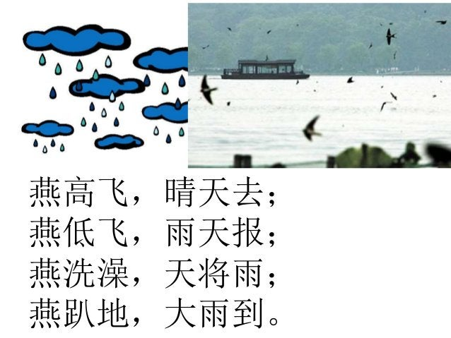 燕高飞,晴天去; 燕低飞,雨天报; 燕洗澡,天将雨; 燕趴地,大雨到。