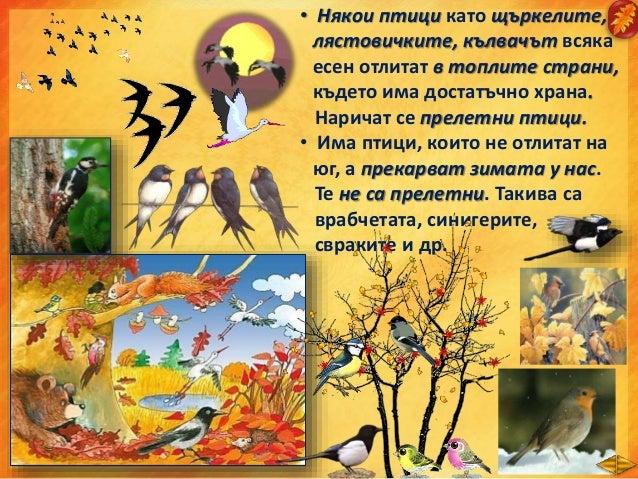 • От цветята цъфтят само димитровчета и хризантеми. • Хората събират есенната реколтата, готвят се за зимата. • В домашнит...