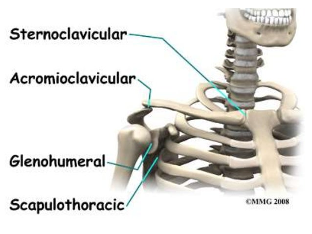 shoulder joint, sterno clavicular joint, acromio-clavicular joint (2), Human Body