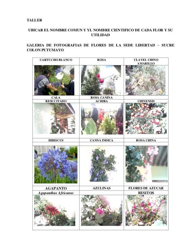 Exploradores para aprender utilidad de las flores de - Clases de flores y sus nombres ...