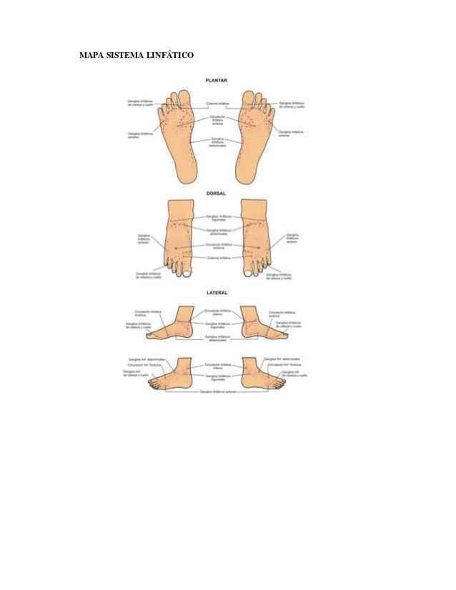 8. mapas de reflexología podal